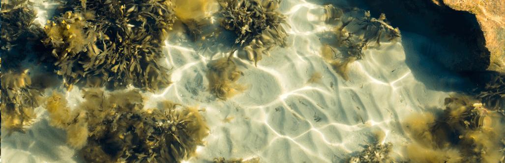 seaweed diet new nordic official webshop. Black Bedroom Furniture Sets. Home Design Ideas